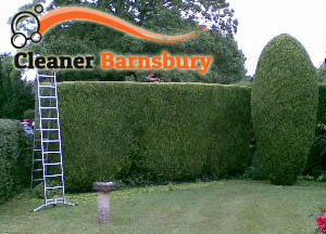 Hedge Maintenance Barnsbury